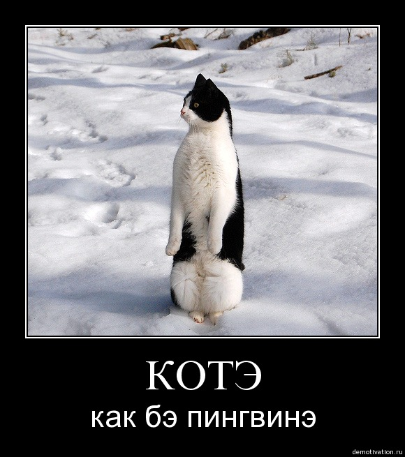 http://freemanager.ucoz.com/_ph/2/117616434.jpg
