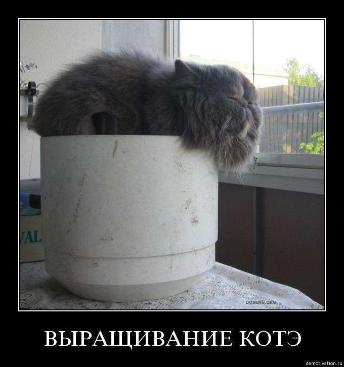 http://freemanager.ucoz.com/_ph/2/610327271.jpg