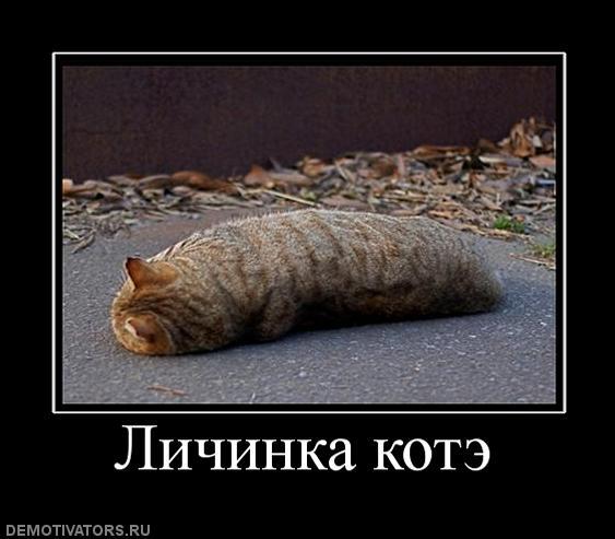 http://freemanager.ucoz.com/_ph/2/969816862.jpg